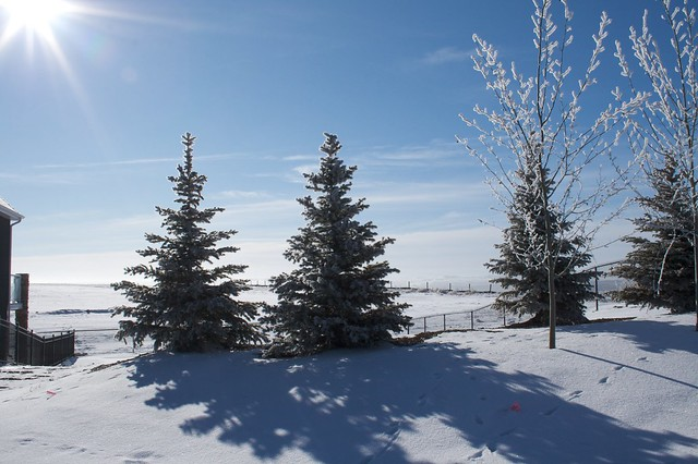 WinterWalk_07