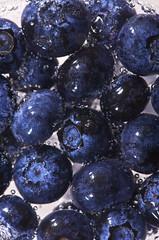 [フリー画像] [食べ物] [果物/フルーツ] [ブルーベリー]        [フリー素材]