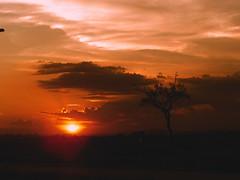 [フリー画像] [自然風景] [空の風景] [雲の風景] [樹木の風景] [夕日/夕焼け/夕暮れ]      [フリー素材]