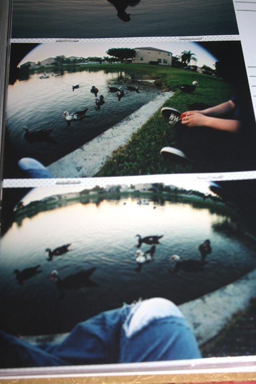 fisheye duck love