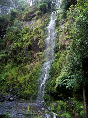 Erskine Falls during heavy rain (Skeggsy) Tags: nature waterfall rainforest lorne erskinefalls greatotwaynationalpark