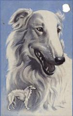 borzoi (Avant Garland) Tags: vintage antique tradingcard retro sighthound playingcard borzoi