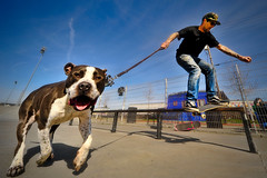 Josh Ruckus Boardslide Still Final (candersonclick) Tags: california dog berkeley skateboarding wideangle skatepark skateboard sigma1224mm skateboarder 2010 nikond700 ruckuspitbull