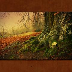 Castanheiros (XIX) (Transmontano) Tags: tree textura portugal photoshop arvores legacy outono texturas textured bragança braganca embrujo coth castaneasativa greatphotographers theworldwelivein imagepoetry castanheiro idream xoox mywinners specialtouch platinumphoto anawesomeshot carrazeda theunforgettablepictures transmontano ilustrarportugal goldstaraward sérieouro portugalespaña carrazedadeansiaes spiritofphotography serieouro artofimages platinumpeaceaward bestcapturesaoi magicunicornverybest magicunicornmasterpiece sailsevenseas trolledproud coppercloudsilvernsun portugalmagico addcda elitegalleryaoi mygearandme mygearandmepremium mygearandmebronze mygearandmegold