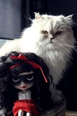 Enma Scarada (------coconut) Tags: red cat persian doll mask makeup carving mascara ribbon blythe custom aubrey rbl primadolly