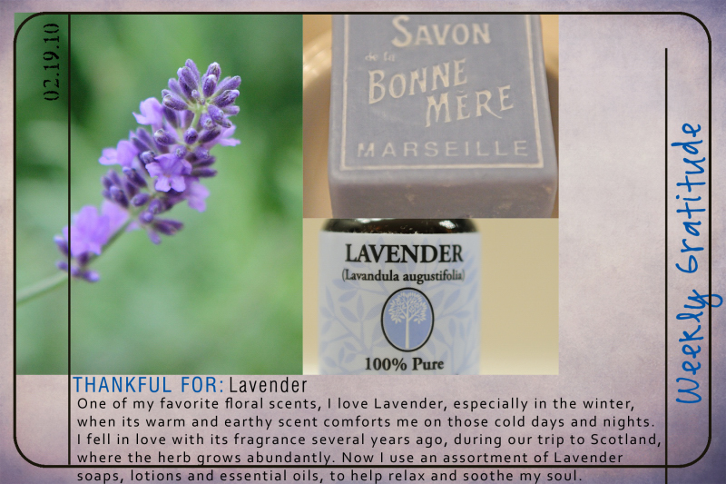 Weekly Gratitude - Lavender
