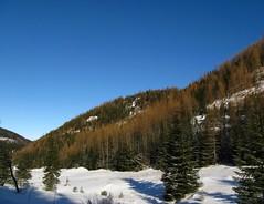 Zakopane 1. nap - A Jaworzynka-vlgy (ndavid42) Tags: winter mountain snow forest hegy dolina pinewood h tl erd lengyelorszg lengyel ttra hegysg jaworzynka fenyerd
