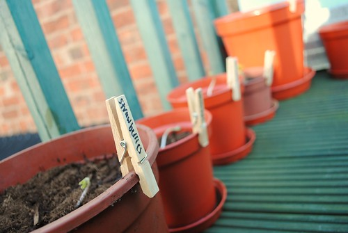 gardening 04.03.10
