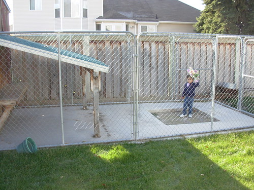 Backyard Dog Run Ideas : This picture shows the patio and cover, as well as the chainlink fence