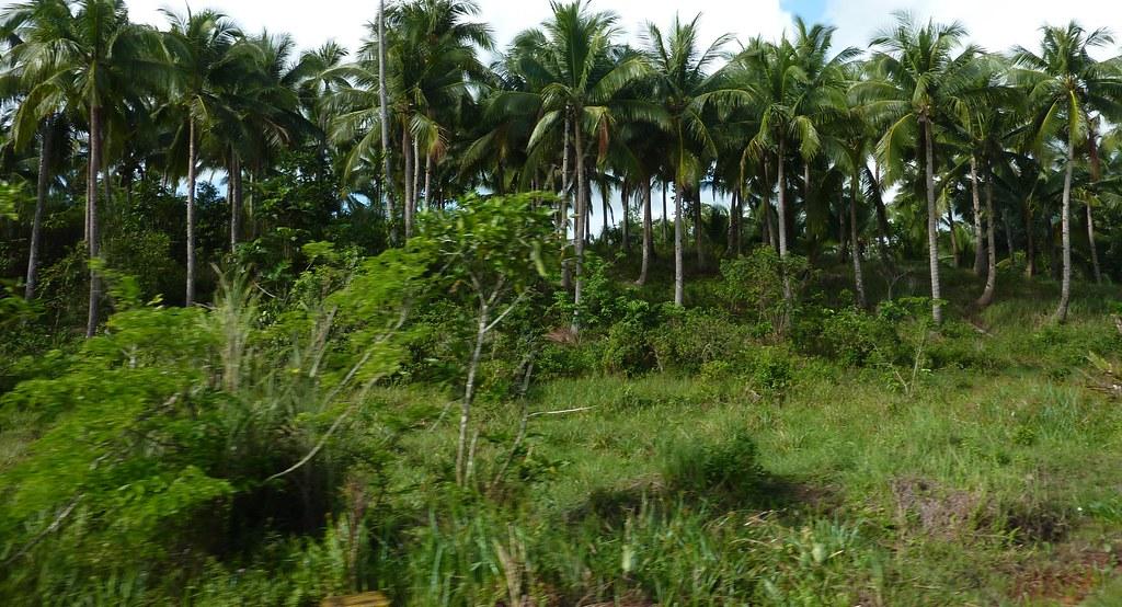 Guiam-Tacloban (3)