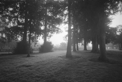 misty morning air