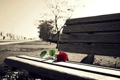 رحت وخليت الفرح ينسى مكآنــيے (MJ ♛) Tags: street red roses flower tree rose canon eos chair efs1855mm 1855mm ef 2010 40d