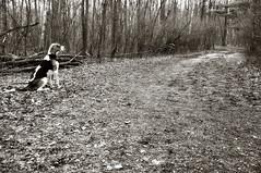 285/353 The Journey Ahead (Paguma / Darren) Tags: road dog love path hound coffeeshop dirty journey floyd tamronspaf1750mmf28xrdiiildasphericalif feelingcroppy