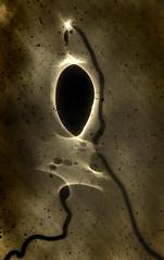 Fleeting Singularity ca. 1897 (Sea Moon) Tags: light abstract shadows experiment refraction caustics fringescience miniblackhole