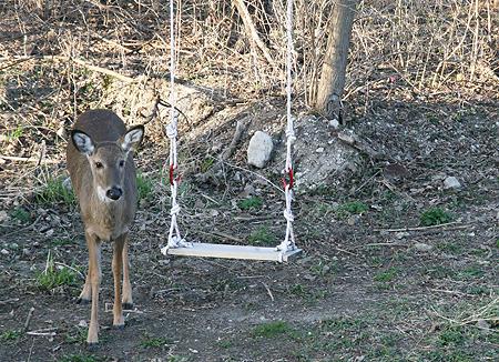 Deer Swing