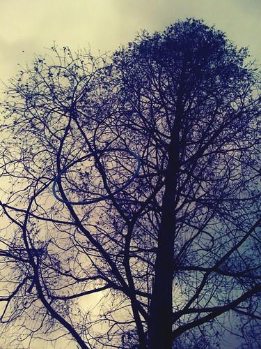 Tree Hoop