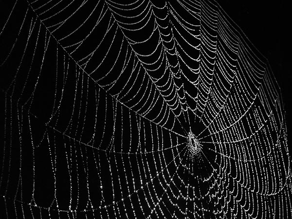 spider-web-1a