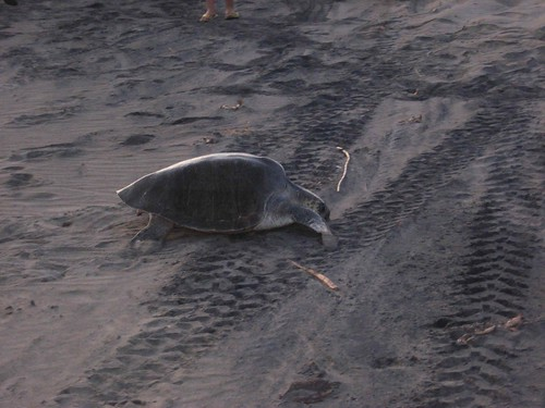 Turtle pix