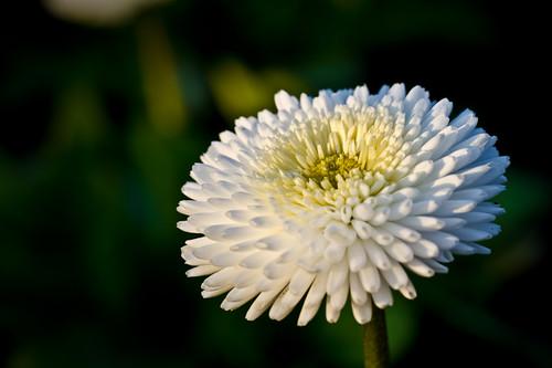 Makroaufnahme Blumen Flower - Joerg Esser Fotografie