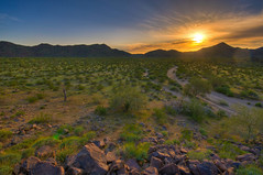 Green Desert Sunset