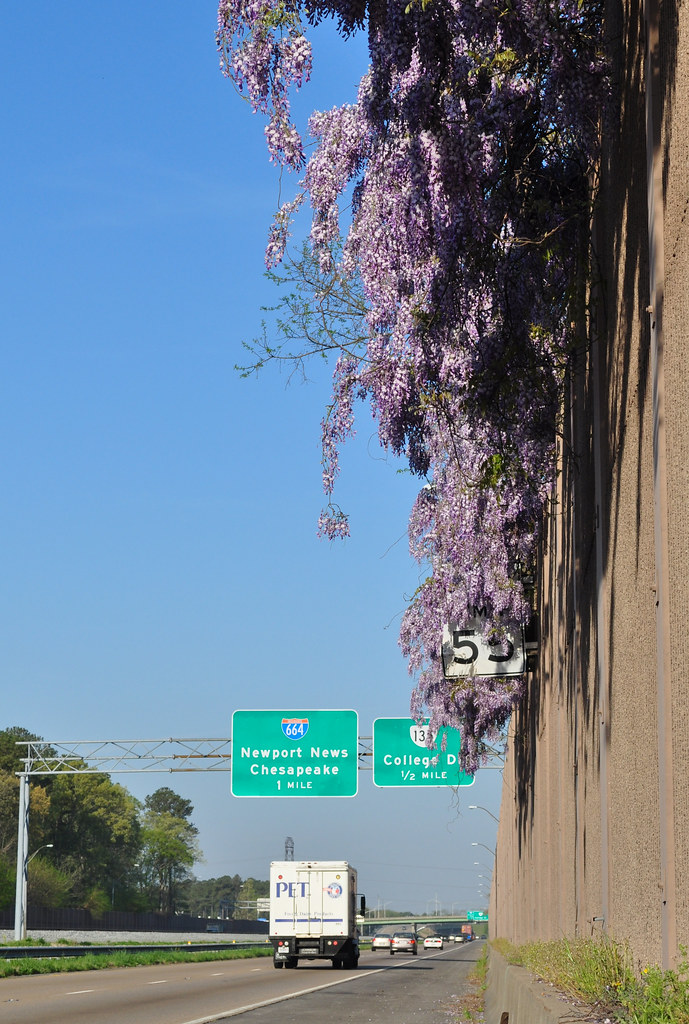 Wisteria Speed Limit