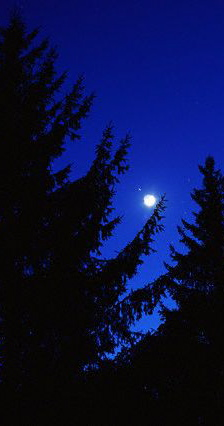 moon in night sky over redwood trees