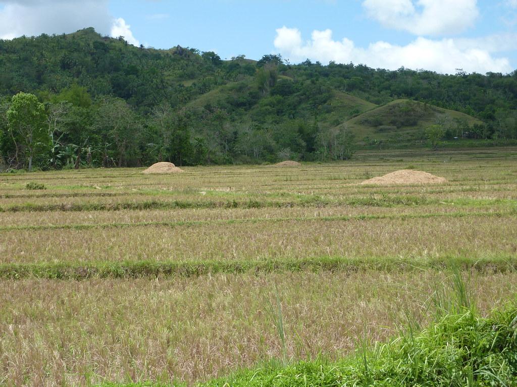 Bohol-Talibon-Chocolate Hills (84)