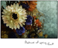 Postcard of spring (in eva vae) Tags: orange macro composition daisies photoshop canon eos rebel spring kiss eva turquoise colorfull postcard creation layer textured laspezia x3 500d eos500d estremità redmatrix t1i eosrebelt1i inevavae