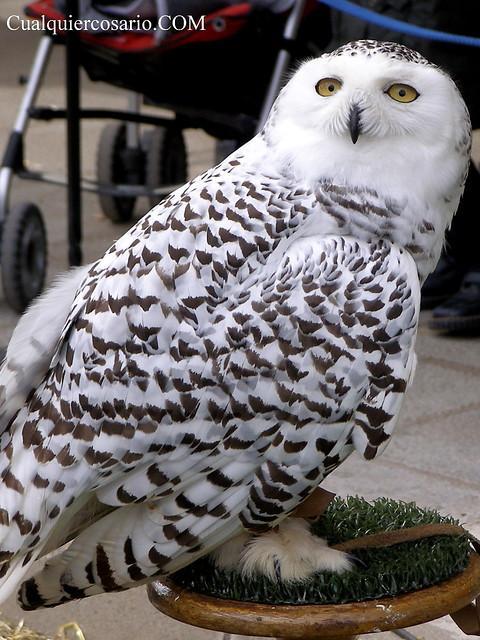 Aves extraordinarias VII