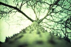 Árbol pinchudo (PAlo Borracho o Algodonero) (Sirkadie) Tags: arbol árbol tronco rama pinchos