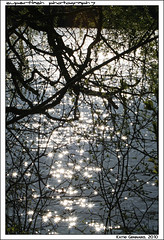 diamonds on the water (superflash) Tags: trees white toronto nature water leaves sparkles reflections spring pond pretty highpark weekend branches sakura cherryblossoms