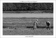 Tel un Millet ... en 2010 (Michel Seguret thanks you all for + 7.700.000 view) Tags: bw art fun countryside couple artist arte kunst dordogne nb pro sw agriculture campagne artiste mbp perigord smrgsbord aquitaine semeuse kartpostal perigordnoir ruralit golddragon thisphotorocks mostbeautifulpicture dragongoldaward flickrestrellas thebestofday gnneniyisi flickrlovers flickrpopularphotographer excelenceofphotographeraward mbpictures mostbeautifulpictures michelseguret todaysbest