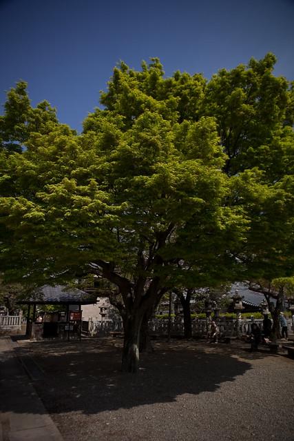 晴れた日の樹影