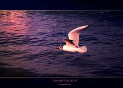 toward the light ... (swaily ◘ Claudio Parente) Tags: sea nikon poetry mare colore flight dream volo poesia gaviota luce gabbiano sogno d300 lucodeimarsi nikond300 claudioparente swaily artofimages saariysqualitypictures bestcapturesaoi elitegalleryaoi