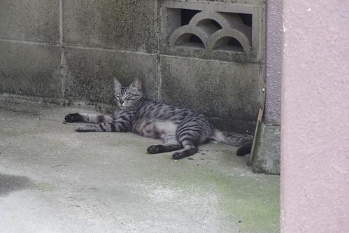 Today's Cat@2010-05-04