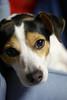 Mini's puppy eyes (Forest Wang) Tags: dog ontario canada cat 50mm iso400 sony flash guelph kitty mini peter peanut denise puppyeyes f20 sonydslra230 dslra230 115secatf20