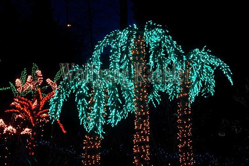 usa washington state bellevue botanical garden christmas light decorations palm trees
