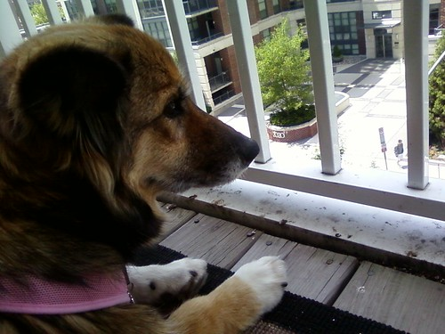 Maggie enjoying the view on our porch