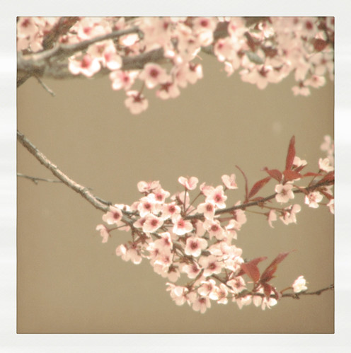 "blossoming tree ""polaroid"""