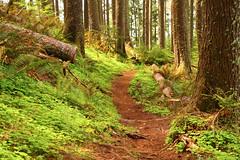 Mt. Neahkahnie-2 (erickPDX) Tags: portland pacific oregoncoast oswaldweststatepark nehalem oregoncoasttrail mtneahkhanie