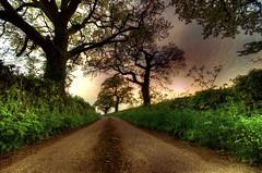 Enchanted Avenue