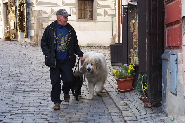 Cesky Krumlov 庫倫諾夫:哇!超大隻的狗~