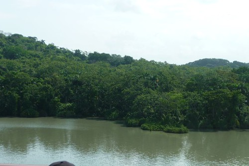 Tree-lined shore