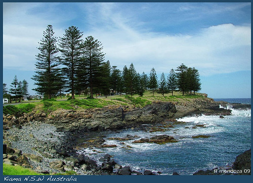 Magnifient  Sea Lancadpe at KIAMA