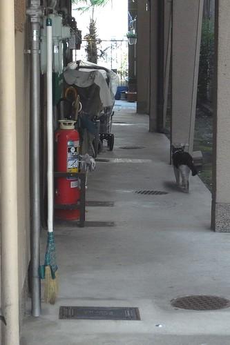 Today's Cat@2010-06-04