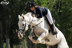 DSC00427-p (Myprofe) Tags: horse caballo jumping salto horsejumping hipica sequestrian saltosdecaballo clubdecampovillademadrid ccvm madridcountryclub