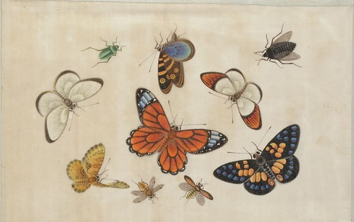 Butterfly Album a