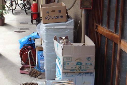 Today's Cat@2010-06-09
