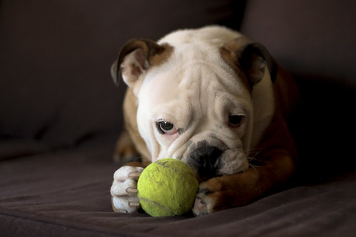 Charlie & his tennis ball