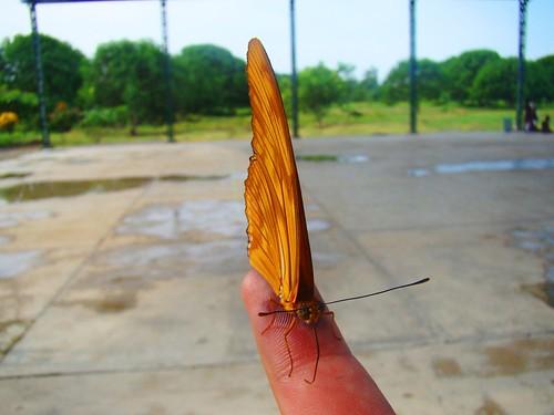 Mariposa en mi mano (2)